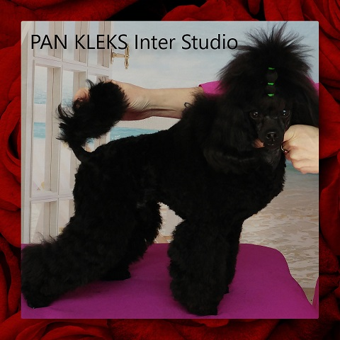 PAN_KLEKS_Inter_Studio_ur._02.04.2018.jpg